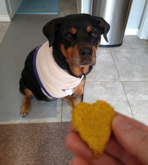 honeybear and cookie