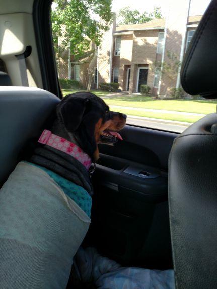 honeybear in car