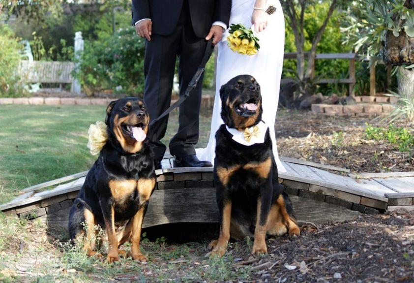 chogan and honeybear wedding